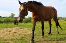 Zirgi Bekšos_10
