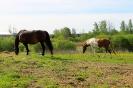 Zirgi Bekšos_12