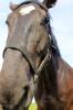 Zirgi Bekšos_14