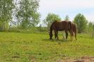 Zirgi Bekšos_17
