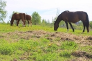 Zirgi Bekšos_18