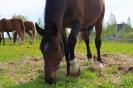 Zirgi Bekšos_21