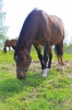 Zirgi Bekšos_22