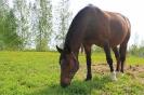 Zirgi Bekšos_23