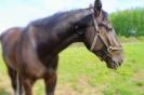 Zirgi Bekšos_26