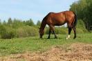 Zirgi Bekšos_30