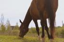 Zirgi Bekšos_33