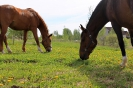 Zirgi Bekšos_34
