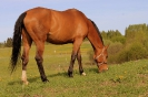 Zirgi Bekšos_35