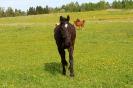 Zirgi Bekšos_3