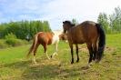 Zirgi Bekšos_5