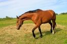 Zirgi Bekšos_6